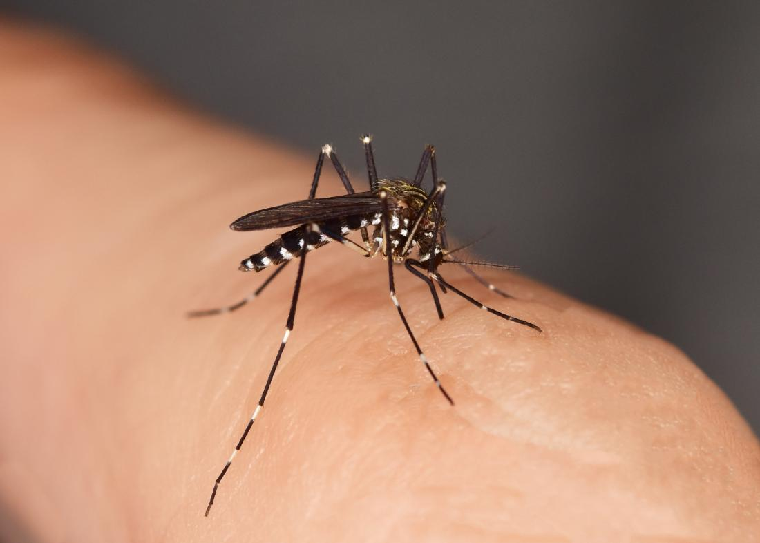The effect of an insect bite can range from mild irritation to a serious disease.