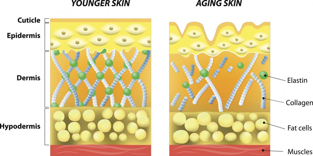 Collagen: What is it and what are its uses?