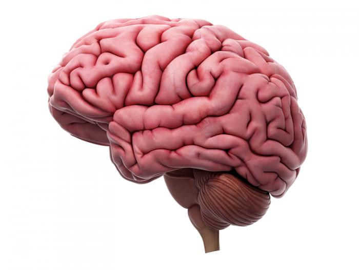 [3D representation of a brain]