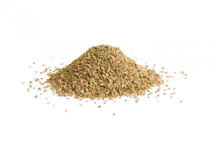 [celery seeds]