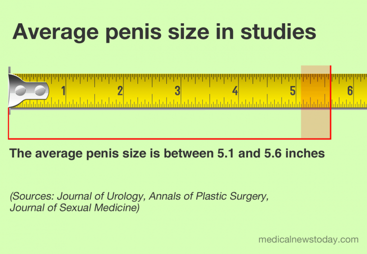 The average penis size in inches