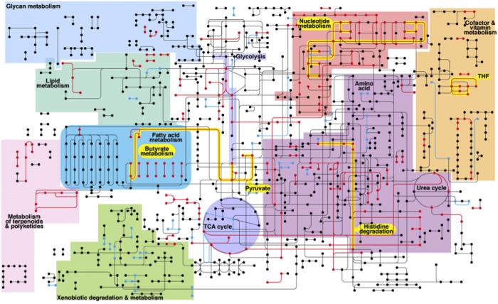 Like a big subway map