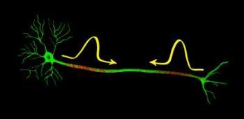 Nerve Signals