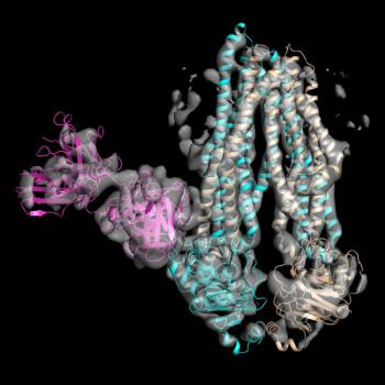 [Structure of Asymmetrical ABC Transporter Complex]