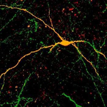 [Interneurons Integrate ]