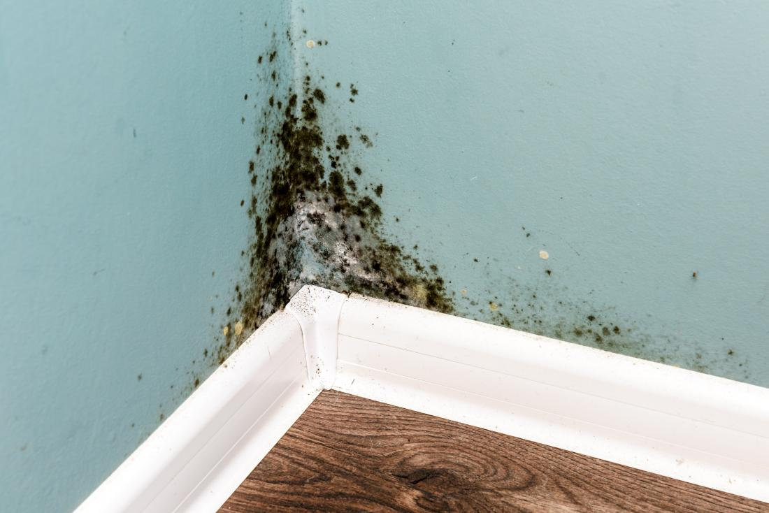 Mold in the home: how big a health problem is it?