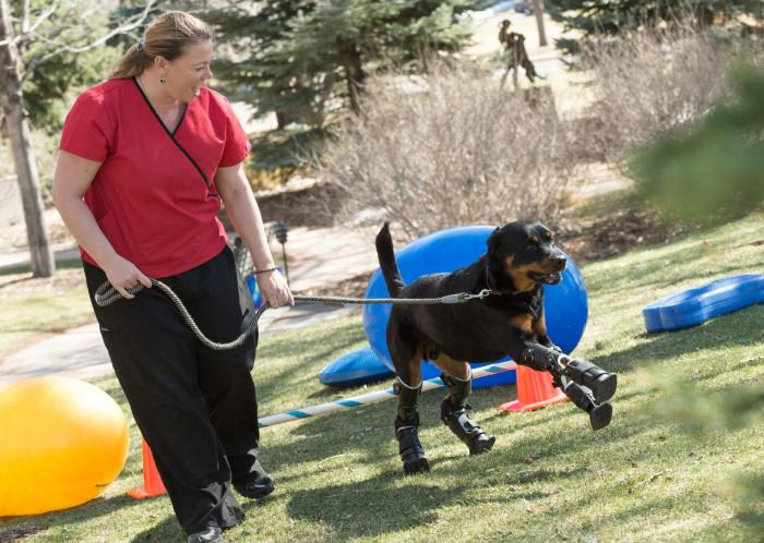 Brutus learns to use his four prosthetic limbs