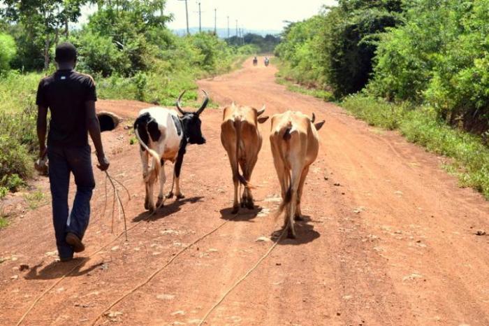Kenyan Farmer with Livestock