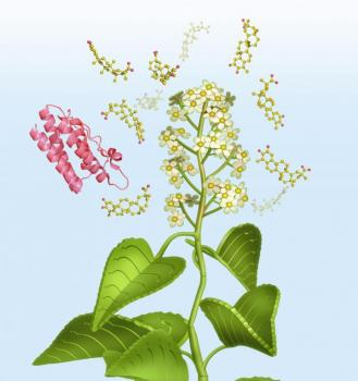Leptin Sensitivity in Bloom