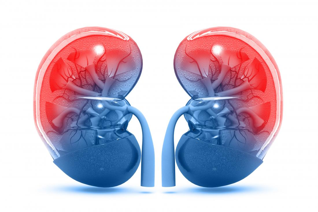 Kidneys: Structure, function, and diseases