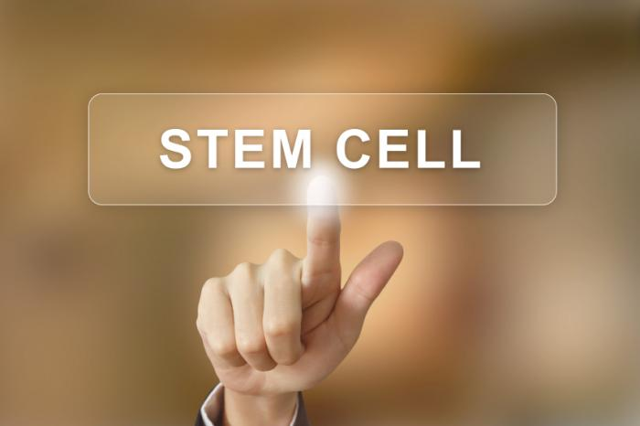 Stem cell therapy: is the US missing a trick?