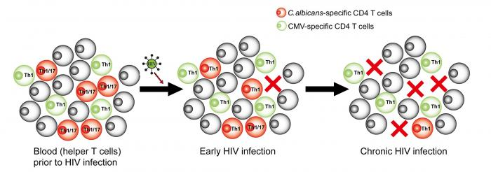 Dysfunction and preferential depletion of Candida-specific helper T cells by HIV
