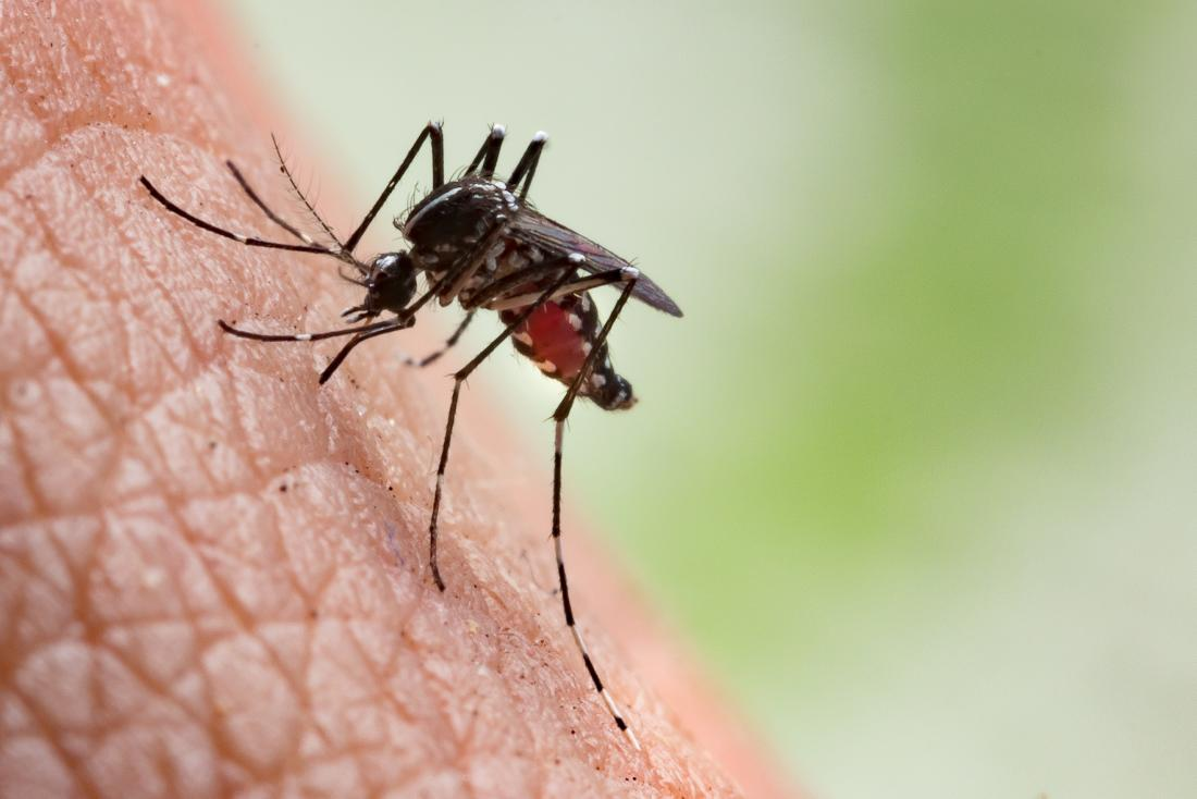 Mosquito bites: Symptoms, complications, and prevention