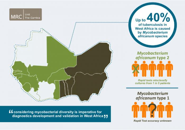 Mycobacterium africanum (Maf), causes up to 40% of TB cases in West Africa