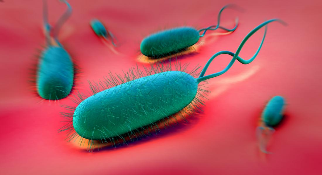 H  pylori: Causes, symptoms, and stomach ulcers