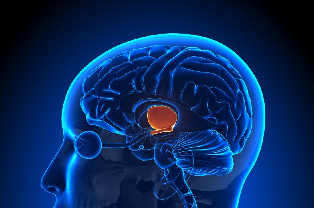 Hypothalamus: Function, hormones, and disorders