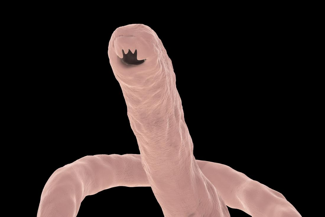 Hookworm Infection: Causes, symptoms, and treatment