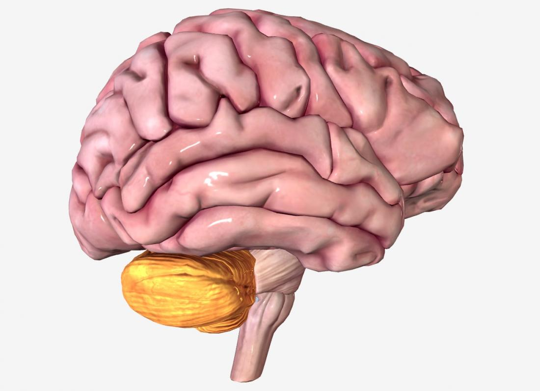 Cerebellum: Anatomy, function, and disorders