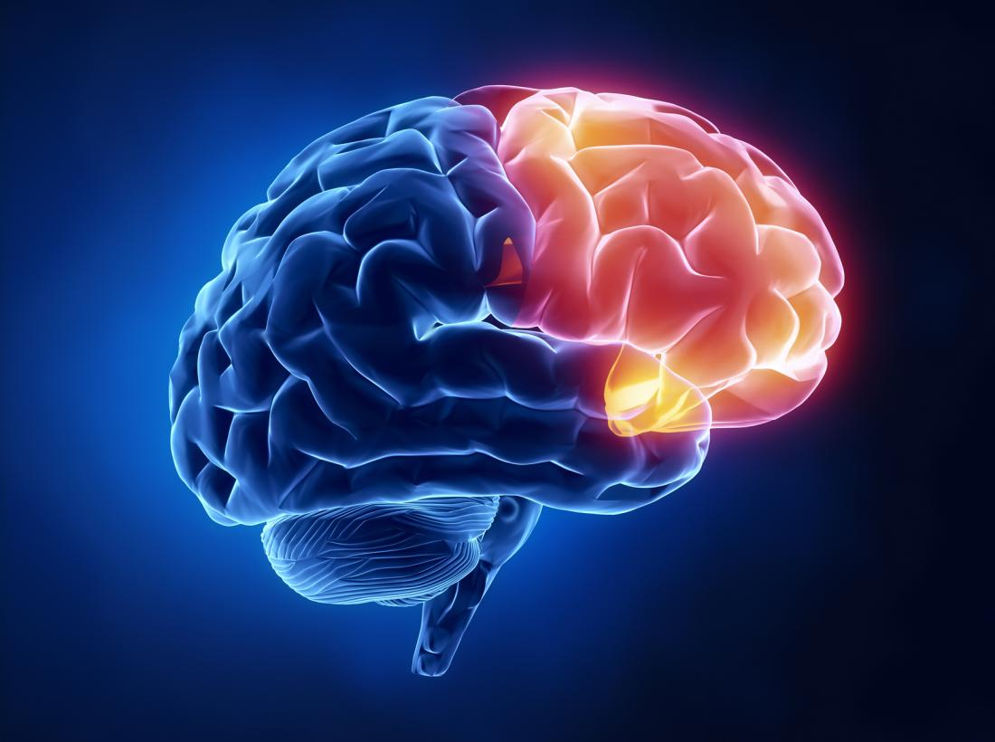 Frontal Lobe Diagram.Frontal Lobe Functions Structure And Damage