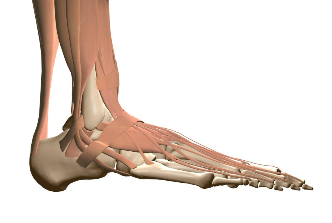 Peroneal Tendonitis Causes Treatment And Recovery