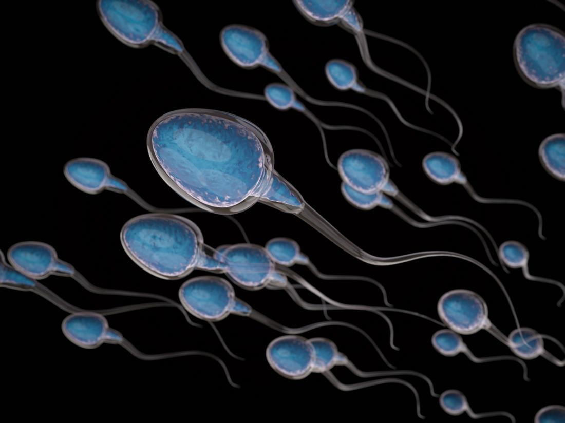 Sperm Morphology Tests And Results-6695