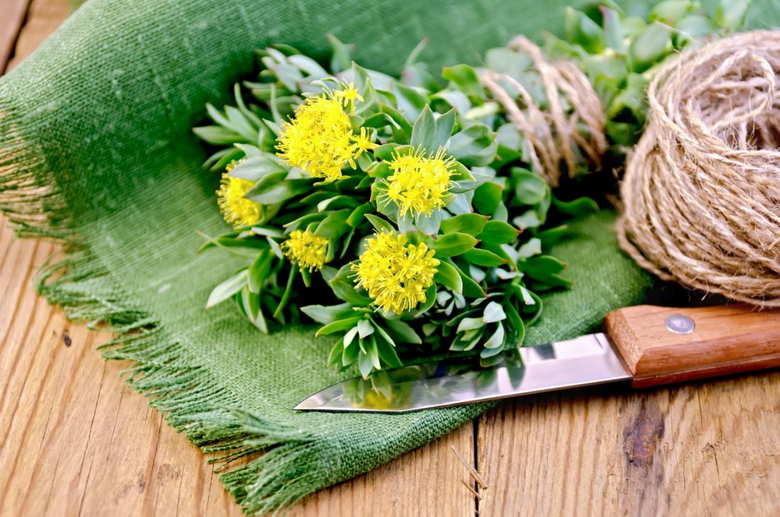 Rhodiola rosea is a flowering herb that has been used in traditional medicine for many years.