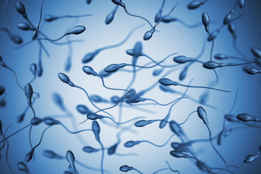 The Lifespan Of Sperm Cells Longevity, Withdrawal, And -8040