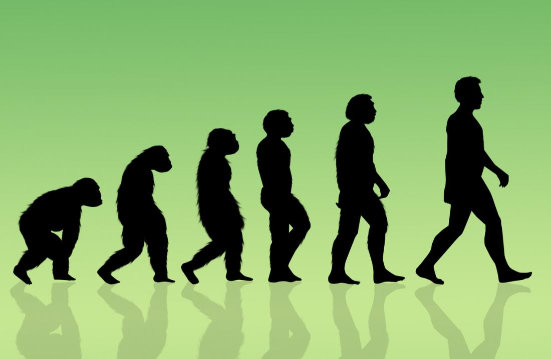 Human evolution illustration