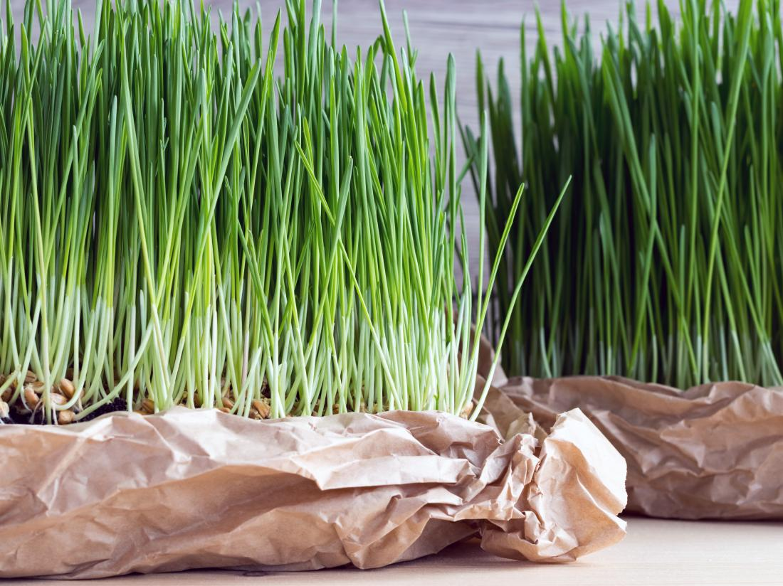 Wheatgrass Benefits Nutrition Side Effects And Warnings