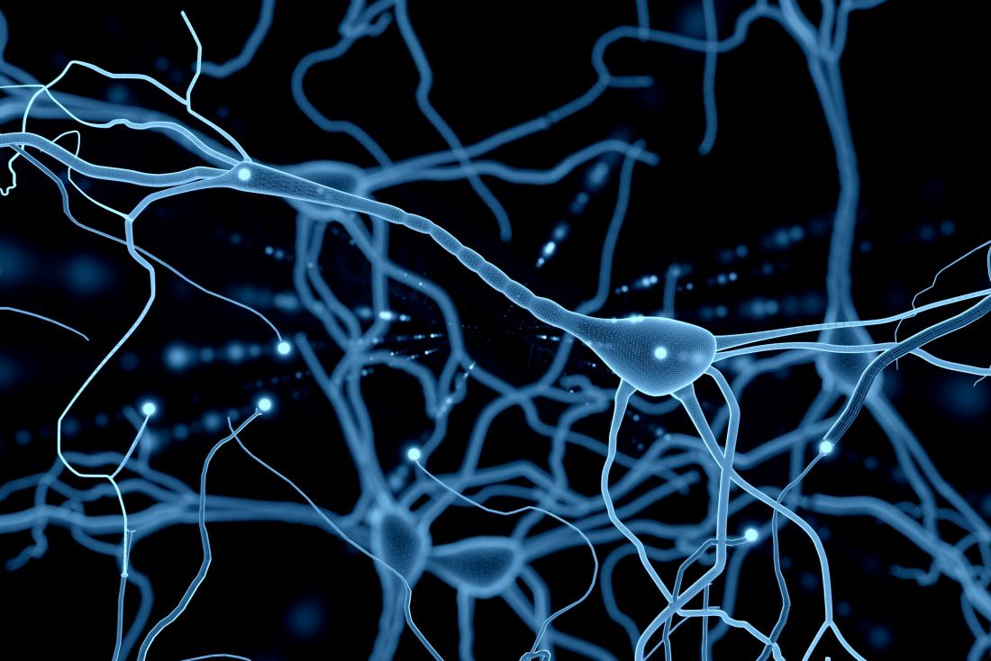 Neurons: What are they and how do they work?