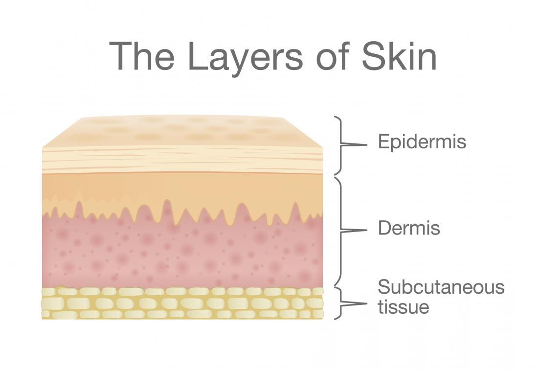 Skin: Structure and function explainedMedical News Today
