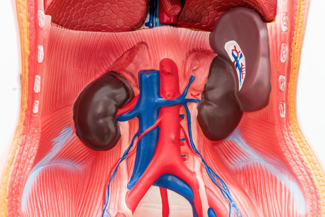 The spleen: Anatomy, function, and disease