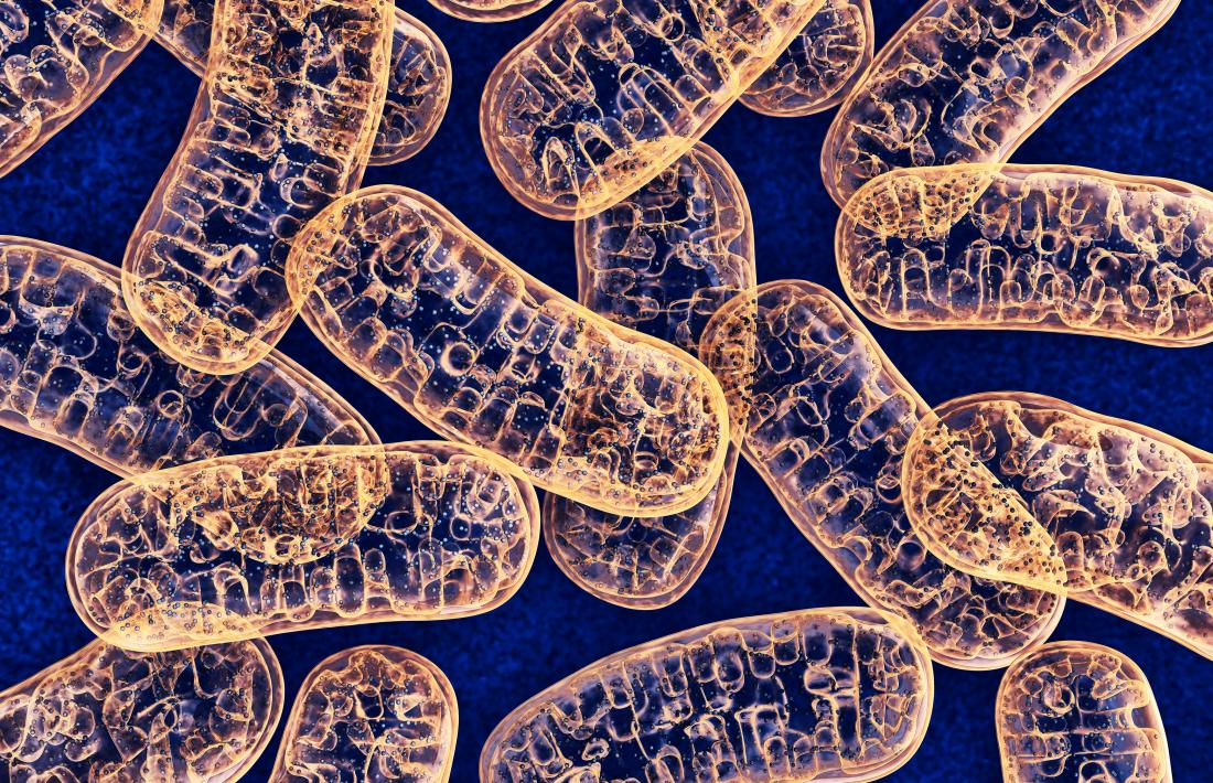 Mitochondria Form Function And Disease