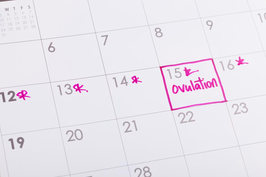 Ovulation marked on a diary