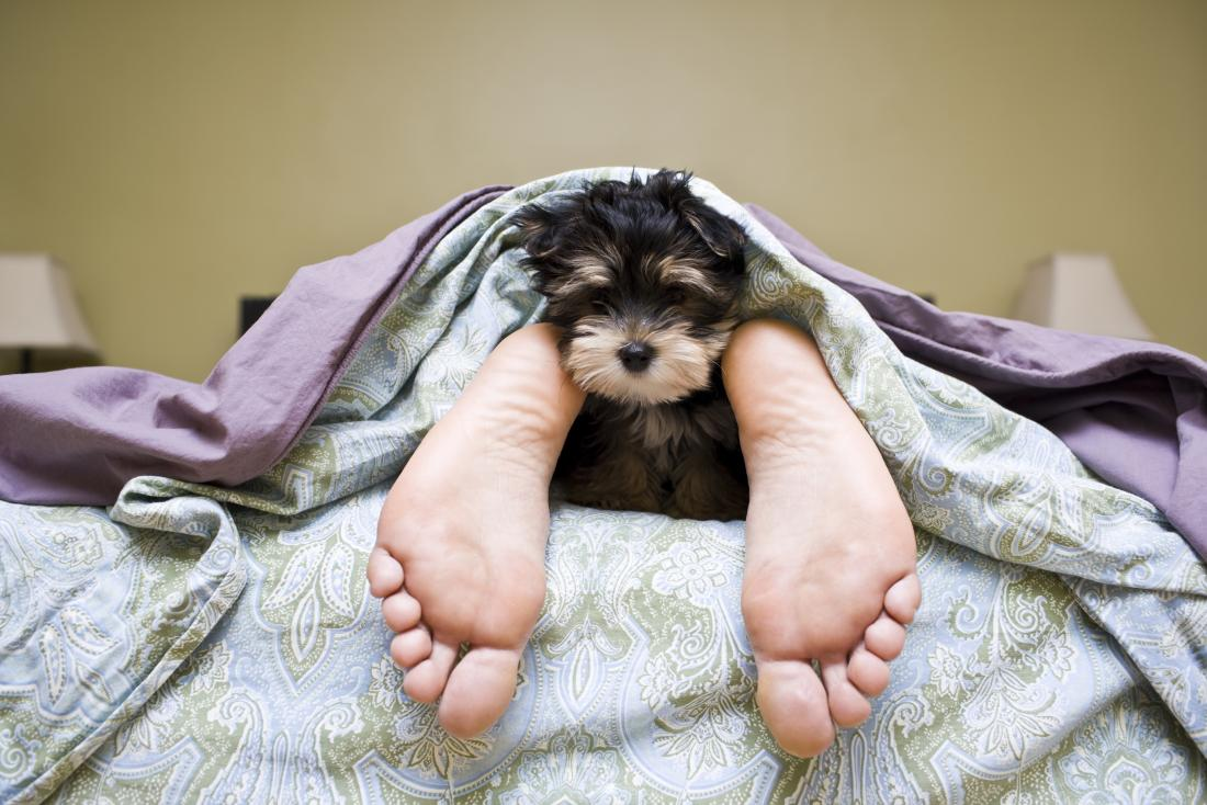Dog allergies: Symptoms, home remedies, and treatment