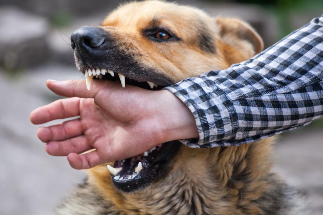 Can we learn to avoid being bitten by dogs?