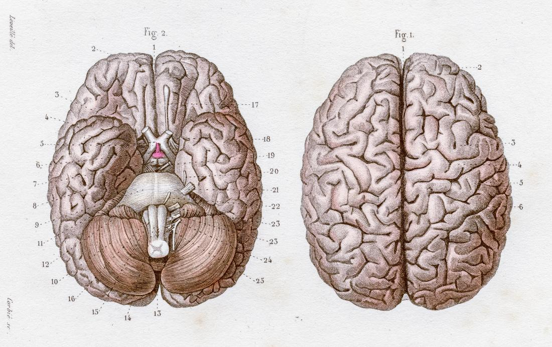 If Genes Dont Turn Off Brains Wiring >> Top 7 Things You Need To Know About The Brain
