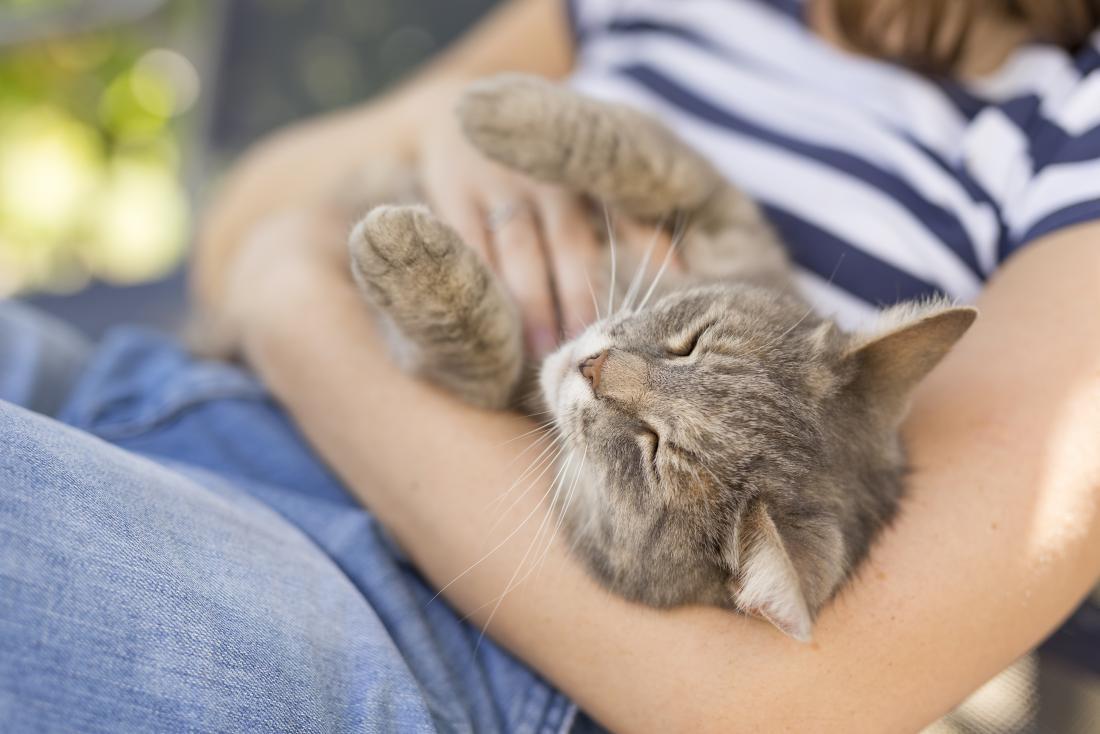 Katze, die im Personenschoss gekuschelt und gekitzelt wird.