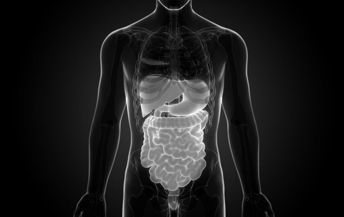 Do our guts have a say in our spatial memory?