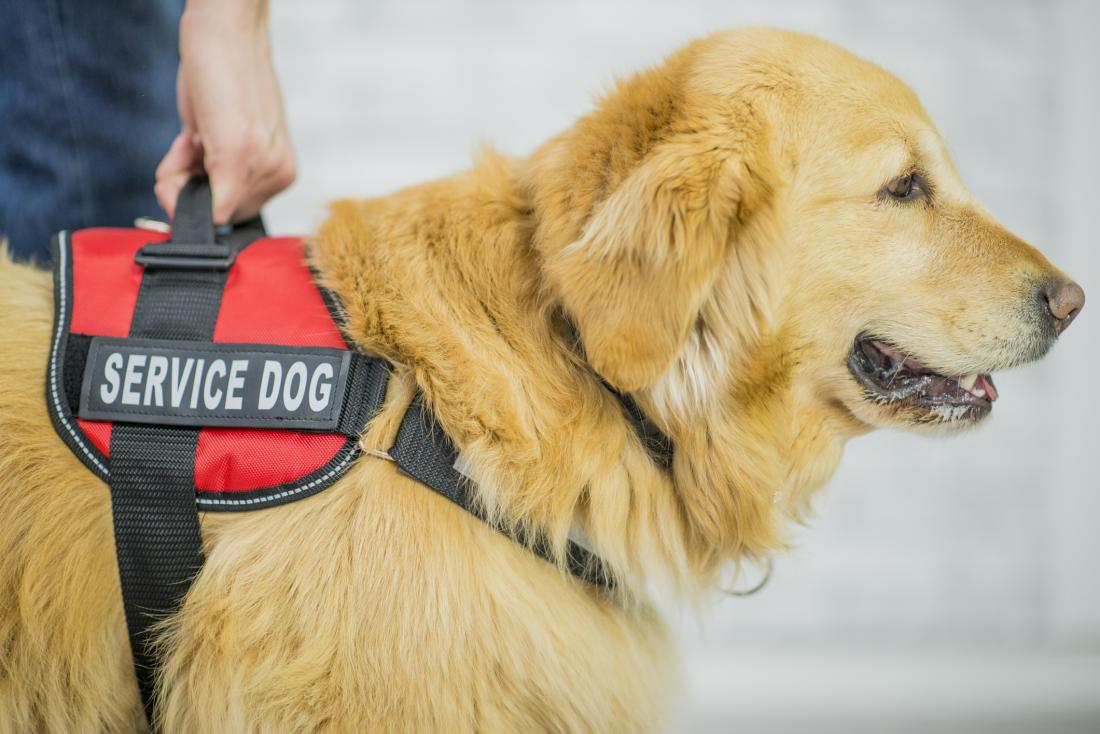 Service dogs for anxiety: Everything you need to know
