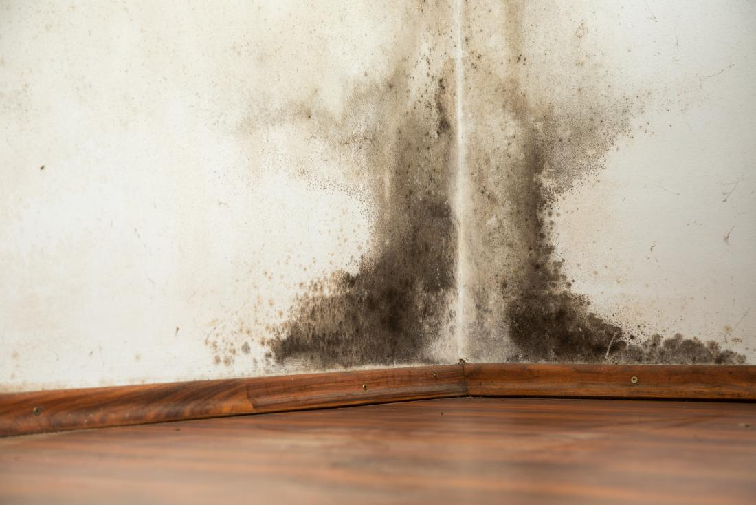 Black mold exposure: Symptoms, treatment, and prevention