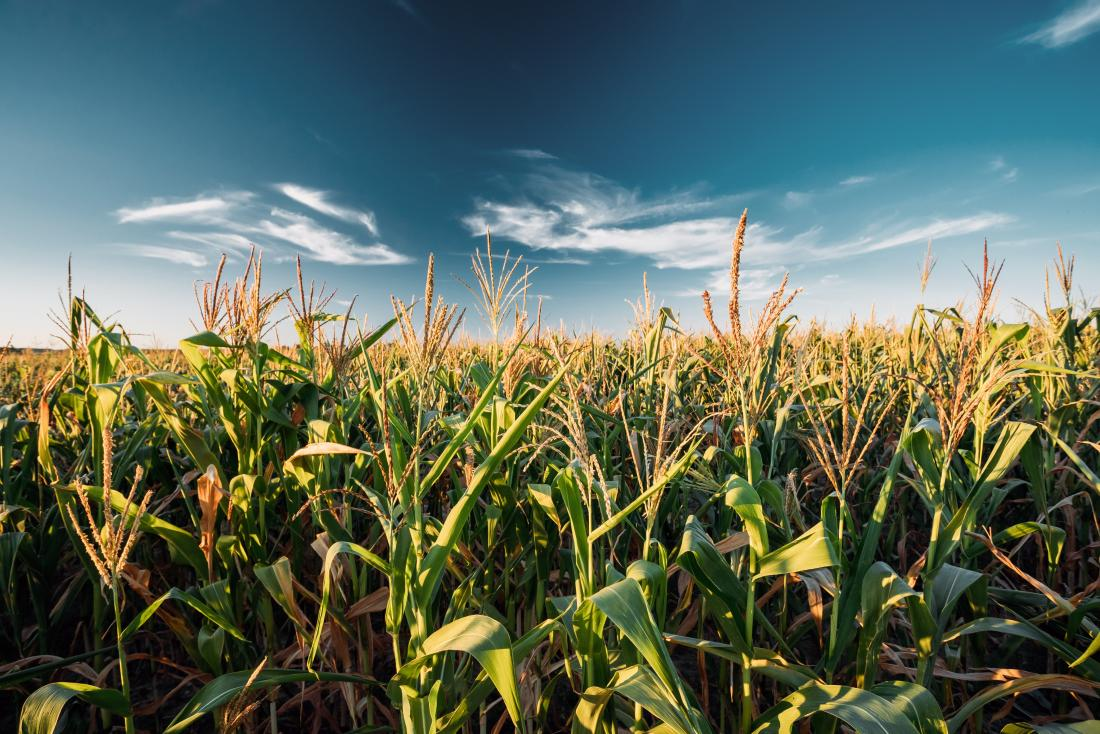 Pros and cons of GMO foods: Health and environment