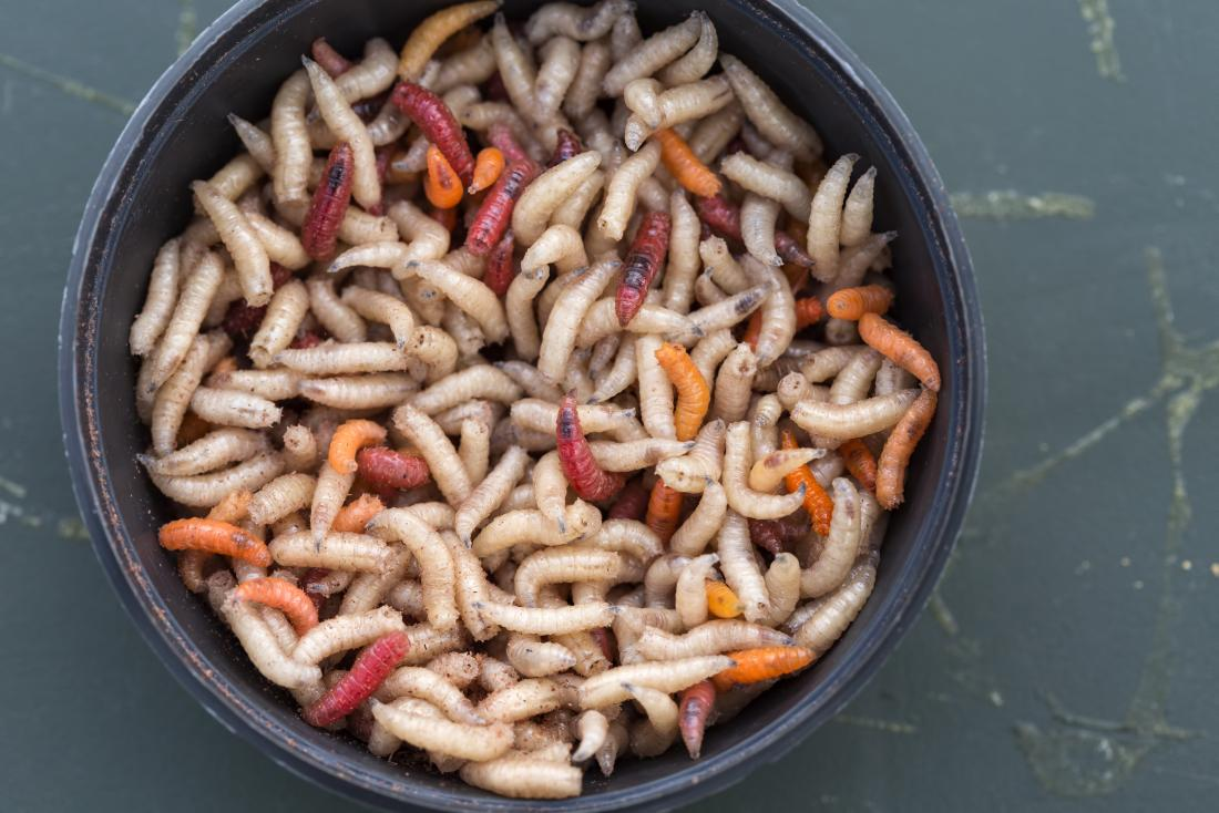 What happens if you eat maggots? Health effects and what to do