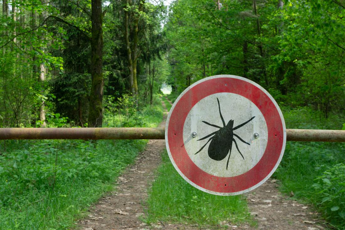 No Autism Is Not Caused By Lyme Disease >> Lyme Disease Why Does Joint Pain Persist