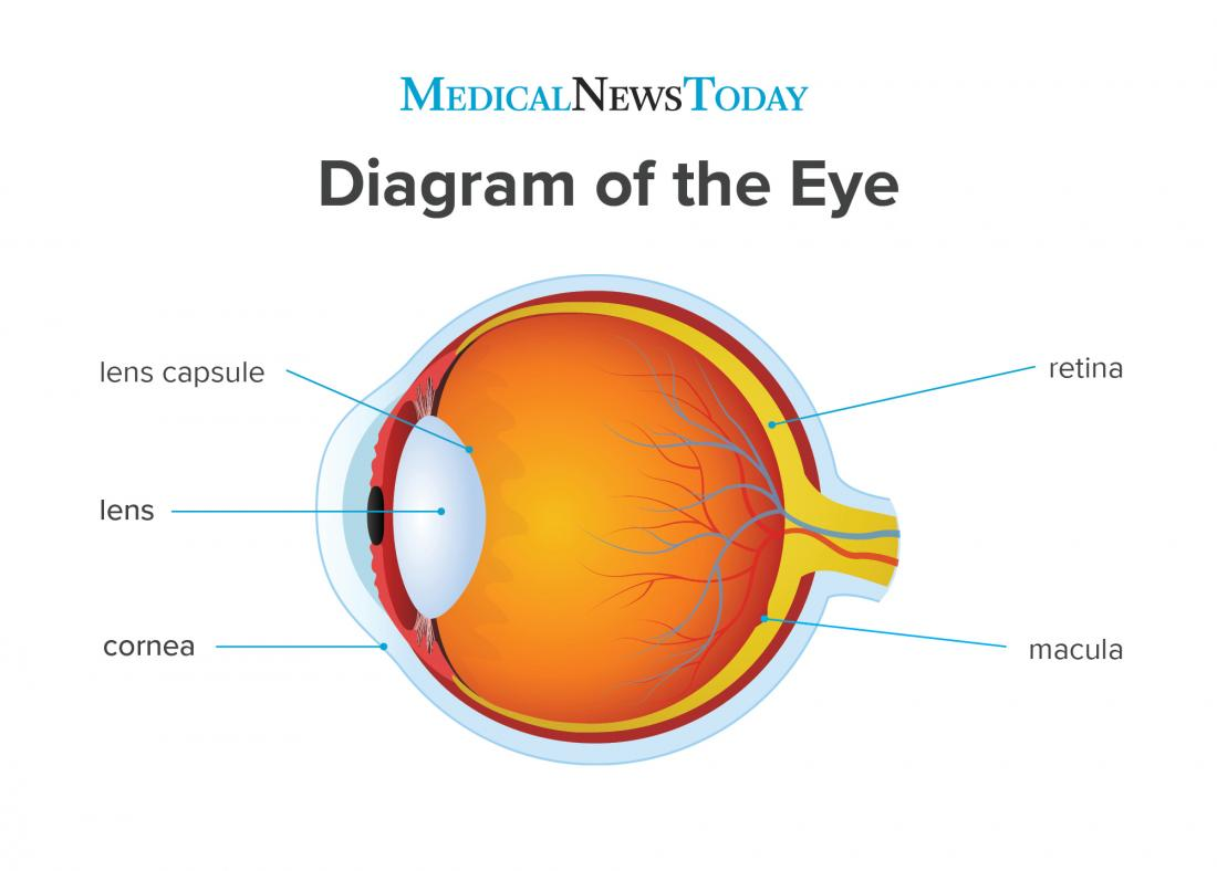 a diagram of the eye.