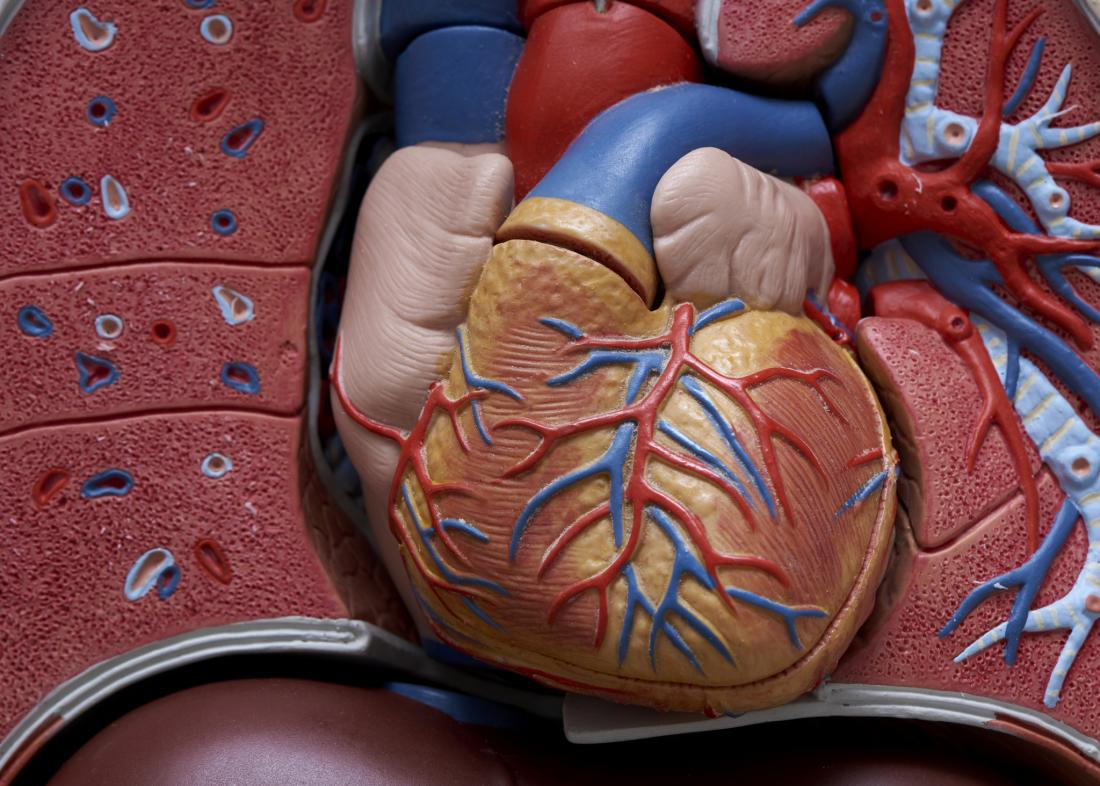 Drug that targets body clock may prevent heart attack damage