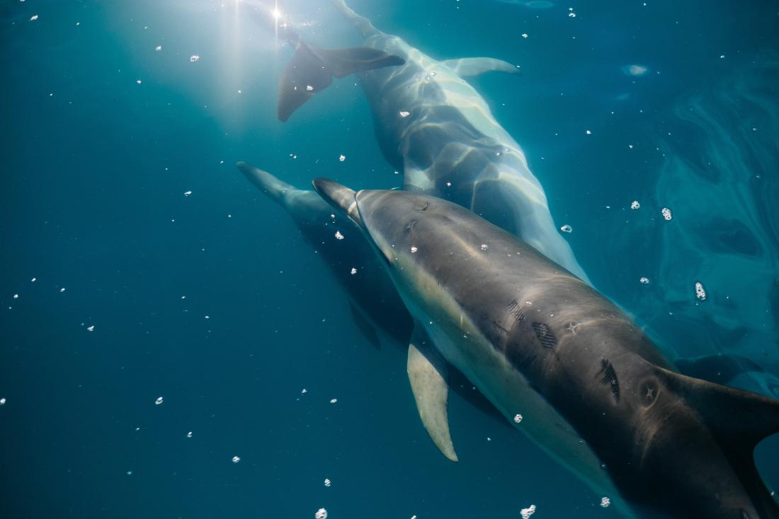 How whales and dolphins evolved for life at sea