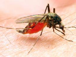 Home remedies for mosquito bites: 6 ways that work