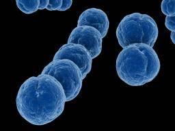 The probiotic that kills antibiotic-resistant bacteria