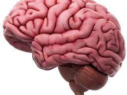 Brain stem stroke: Symptoms, recovery, and outlook